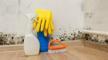 Common Places Where Mold Grows in Homes